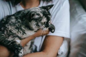 A cat in arms of owner